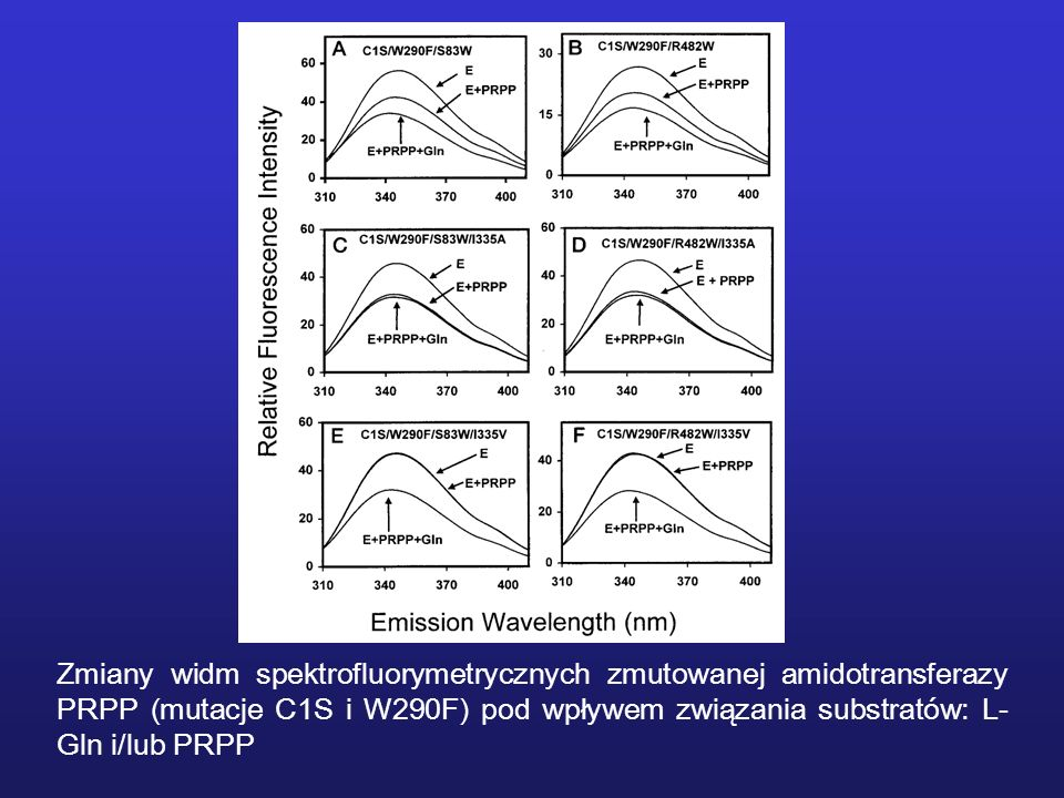 Zmiany widm spektrofluorymetrycznych zmutowanej amidotransferazy PRPP (mutacje C1S i W290F) pod wpływem związania substratów: L-Gln i/lub PRPP