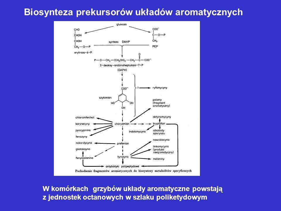 Biosynteza prekursorów układów aromatycznych