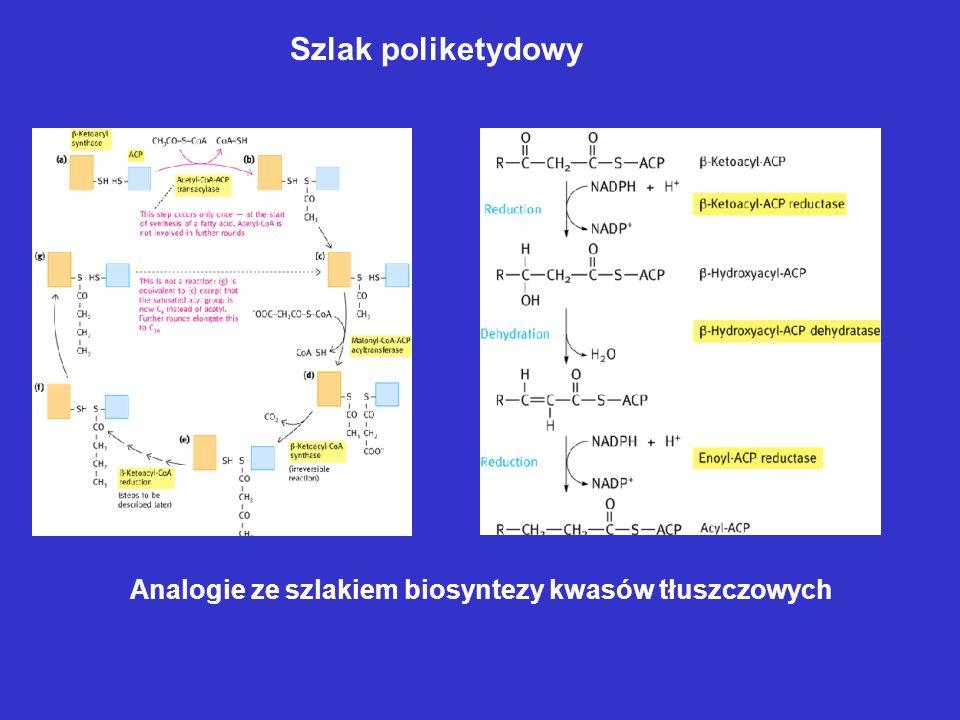 Szlak poliketydowy Analogie ze szlakiem biosyntezy kwasów tłuszczowych
