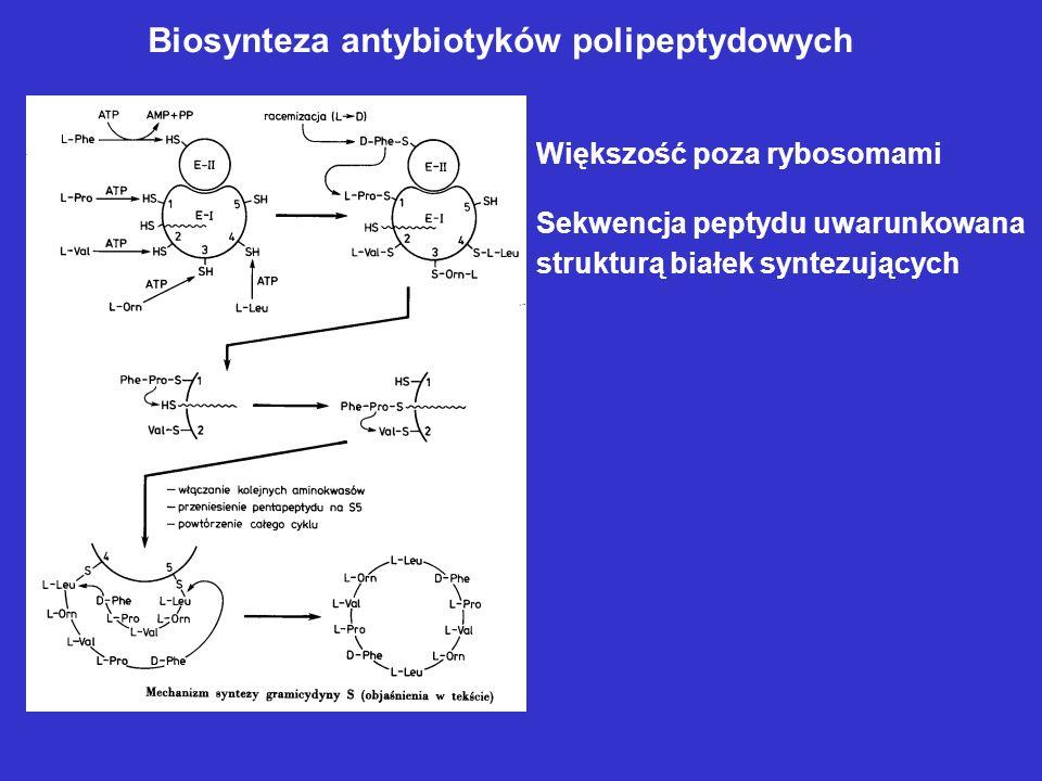 Biosynteza antybiotyków polipeptydowych