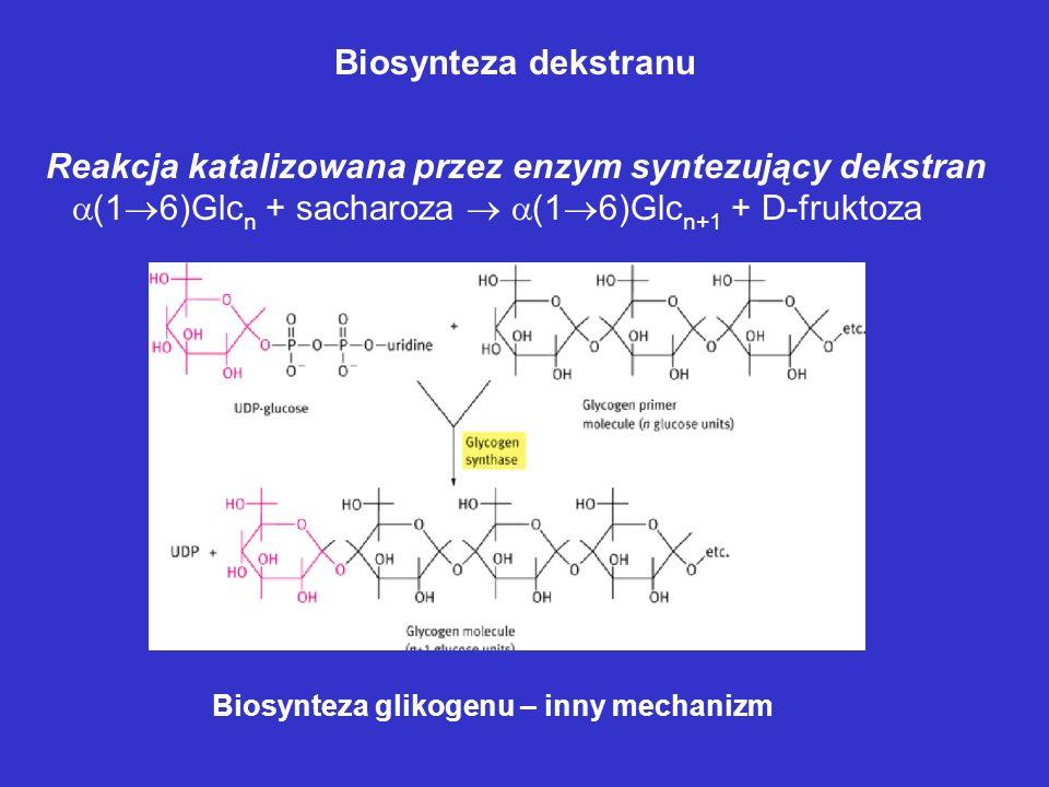 Reakcja katalizowana przez enzym syntezujący dekstran
