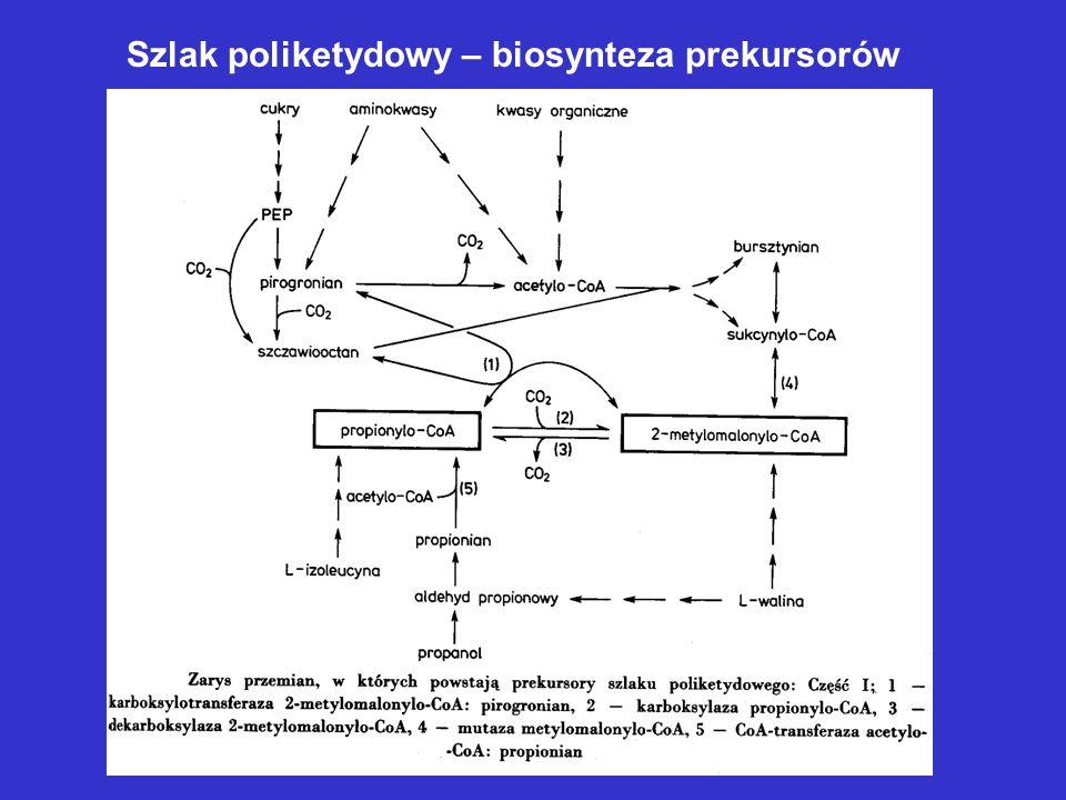 Szlak poliketydowy – biosynteza prekursorów