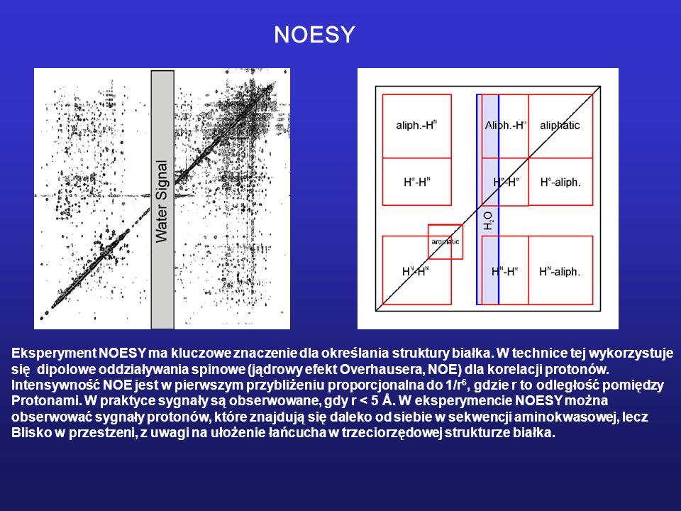 NOESY Eksperyment NOESY ma kluczowe znaczenie dla określania struktury białka. W technice tej wykorzystuje.