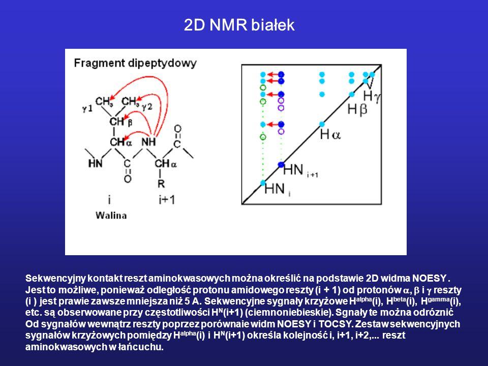 2D NMR białek