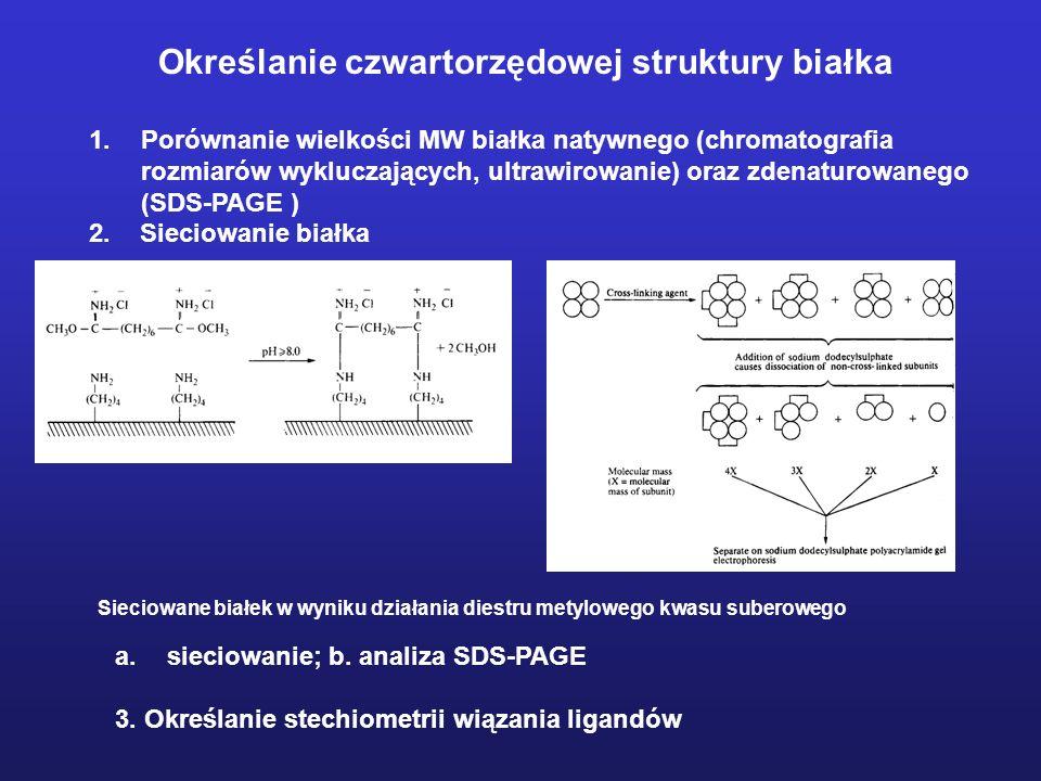 Określanie czwartorzędowej struktury białka