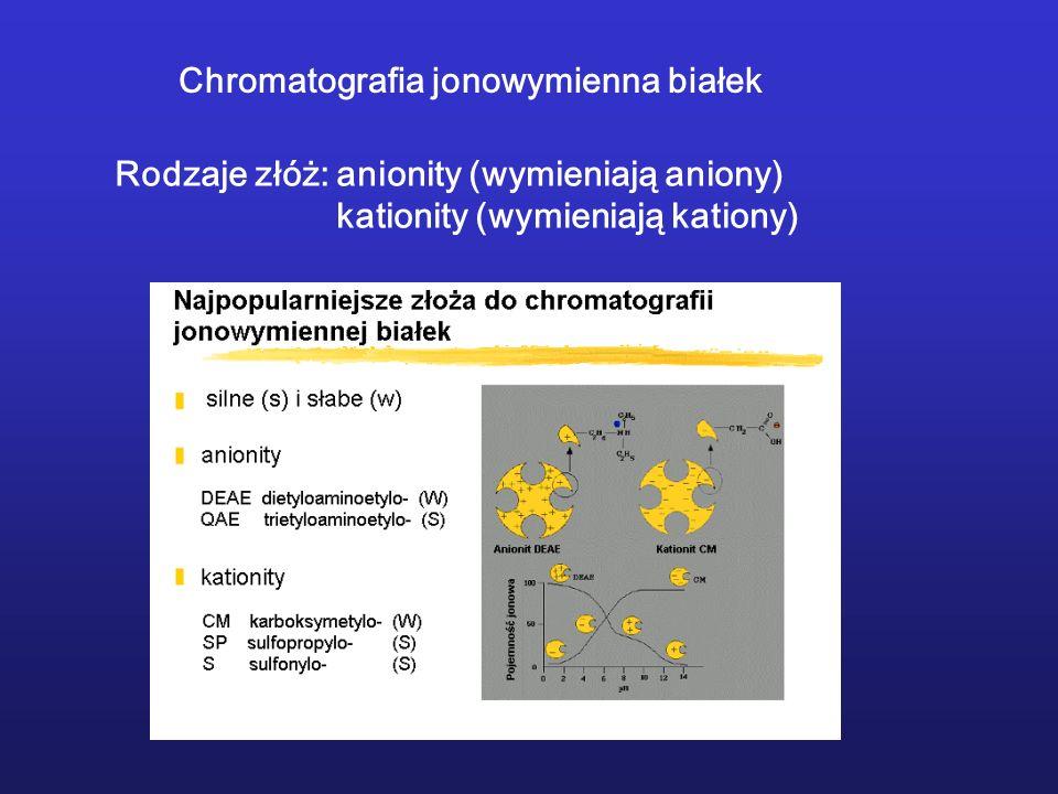 Chromatografia jonowymienna białek