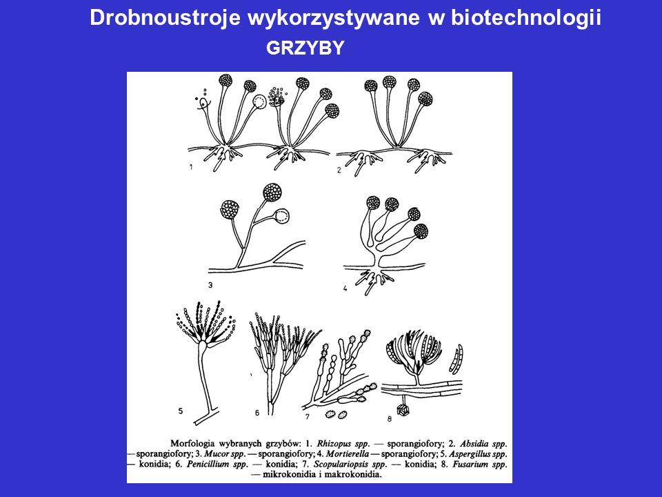 Drobnoustroje wykorzystywane w biotechnologii