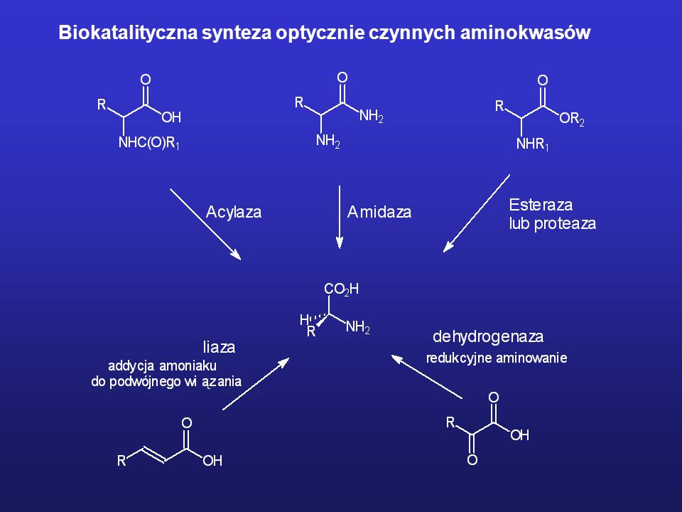 Biokatalityczna synteza optycznie czynnych aminokwasów