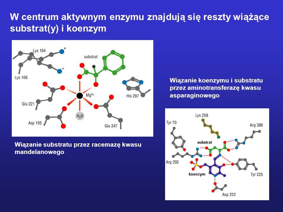 W centrum aktywnym enzymu znajdują się reszty wiążące
