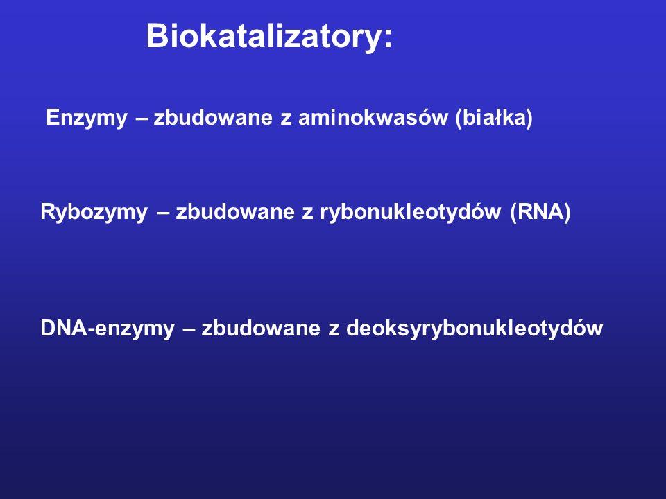 Biokatalizatory: Enzymy – zbudowane z aminokwasów (białka)