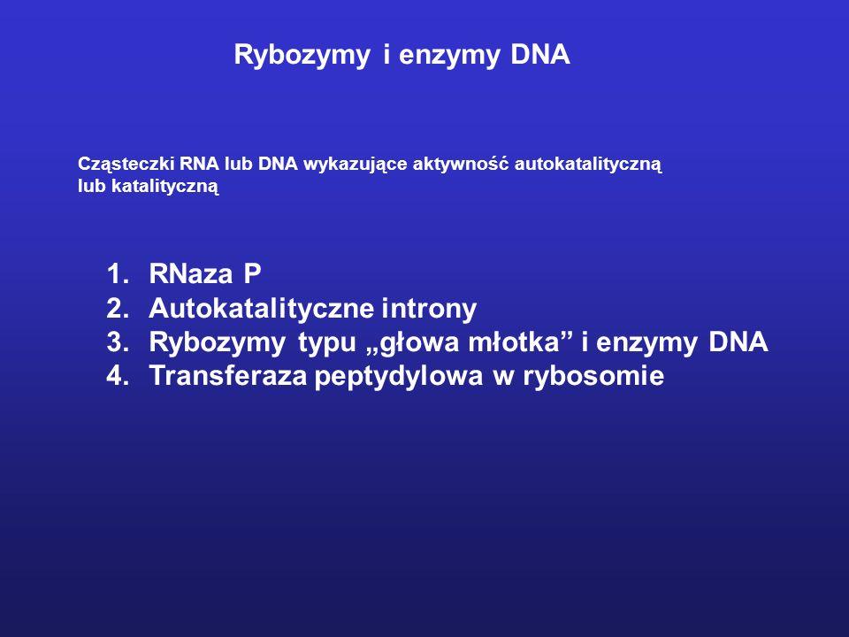 """Autokatalityczne introny Rybozymy typu """"głowa młotka i enzymy DNA"""