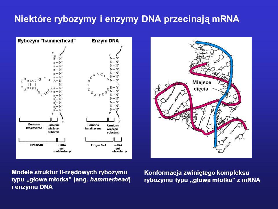 Niektóre rybozymy i enzymy DNA przecinają mRNA