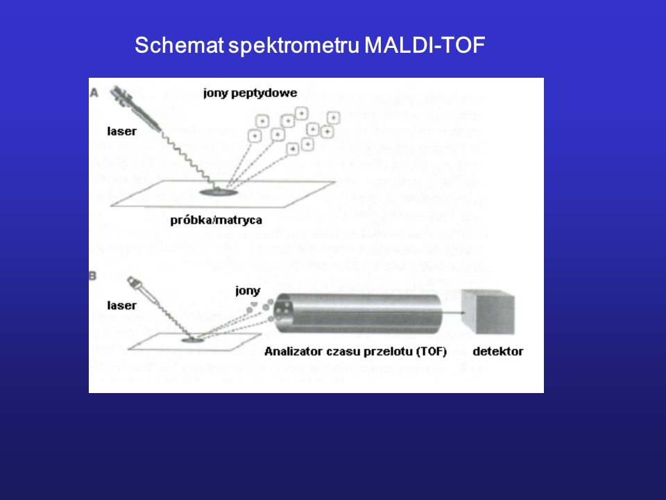 Schemat spektrometru MALDI-TOF