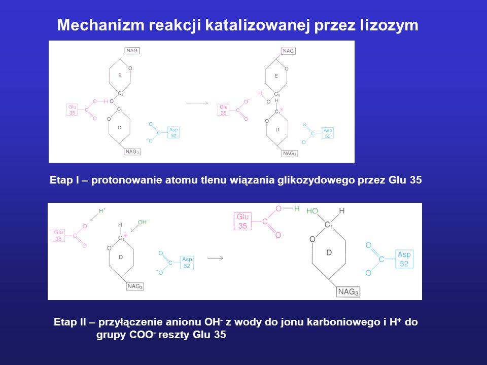 Mechanizm reakcji katalizowanej przez lizozym