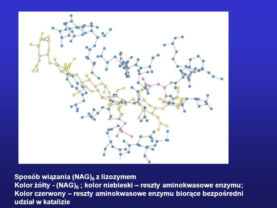 Sposób wiązania (NAG)6 z lizozymem