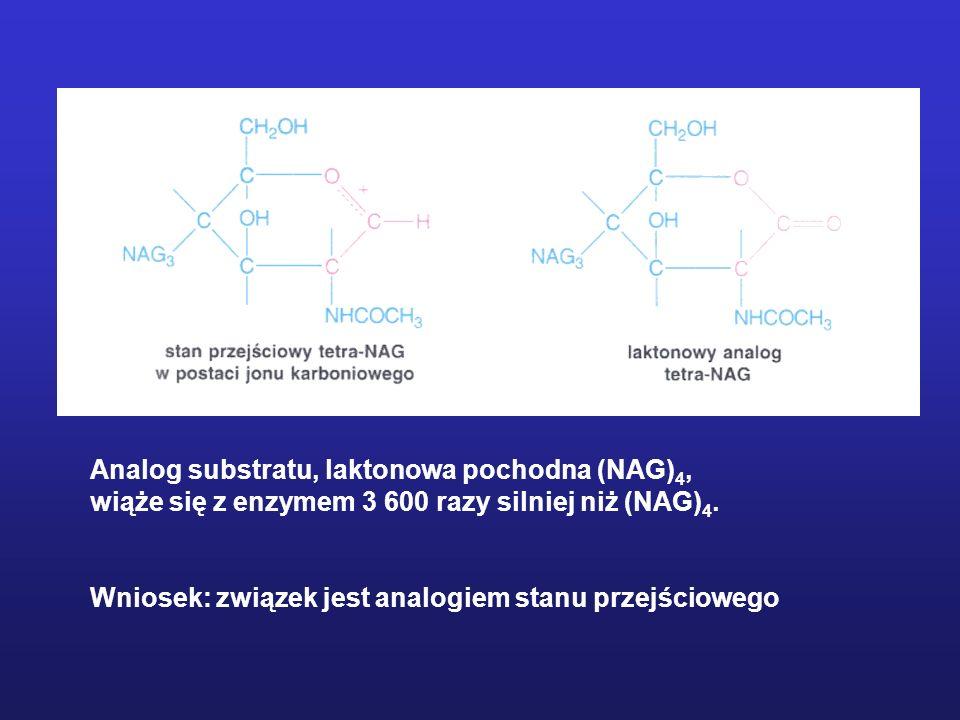 Analog substratu, laktonowa pochodna (NAG)4,