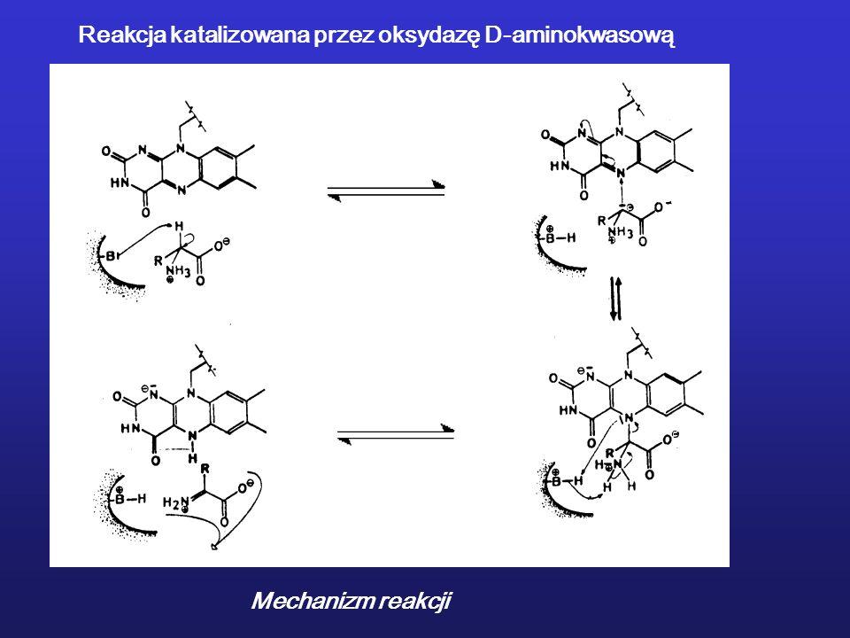 Reakcja katalizowana przez oksydazę D-aminokwasową