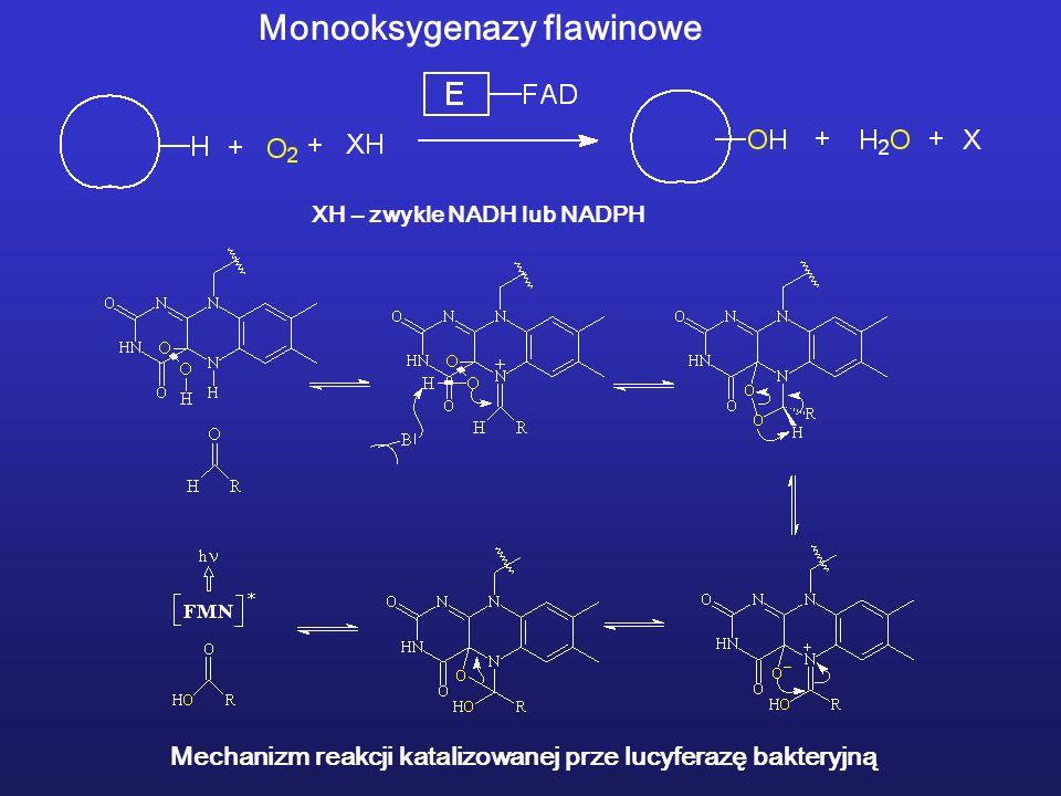 Monooksygenazy flawinowe