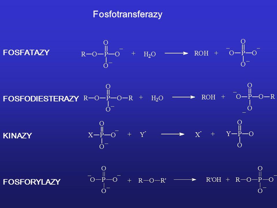 Fosfotransferazy FOSFATAZY FOSFODIESTERAZY KINAZY FOSFORYLAZY