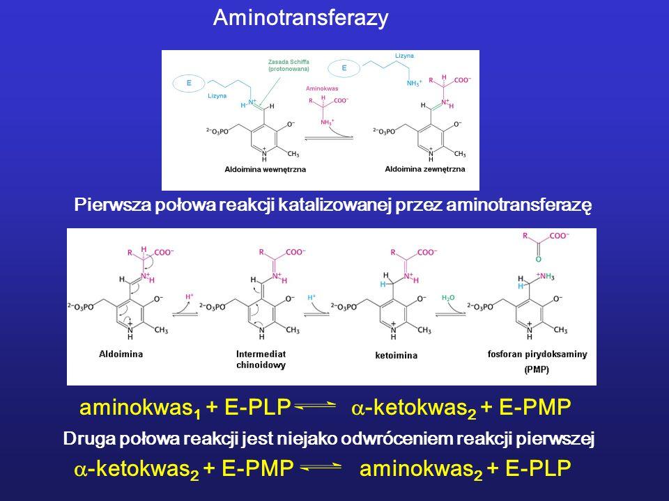 aminokwas1 + E-PLP -ketokwas2 + E-PMP