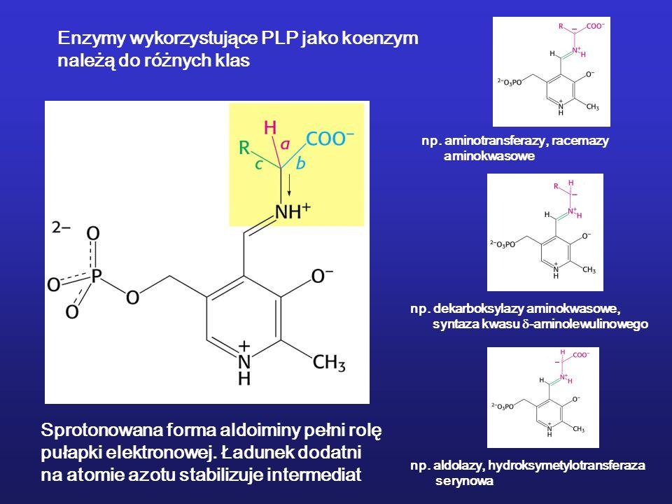 Enzymy wykorzystujące PLP jako koenzym należą do różnych klas