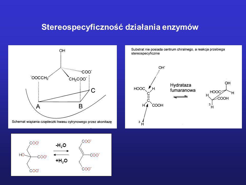 Stereospecyficzność działania enzymów