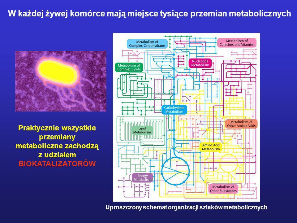 Praktycznie wszystkie przemiany metaboliczne zachodzą z udziałem
