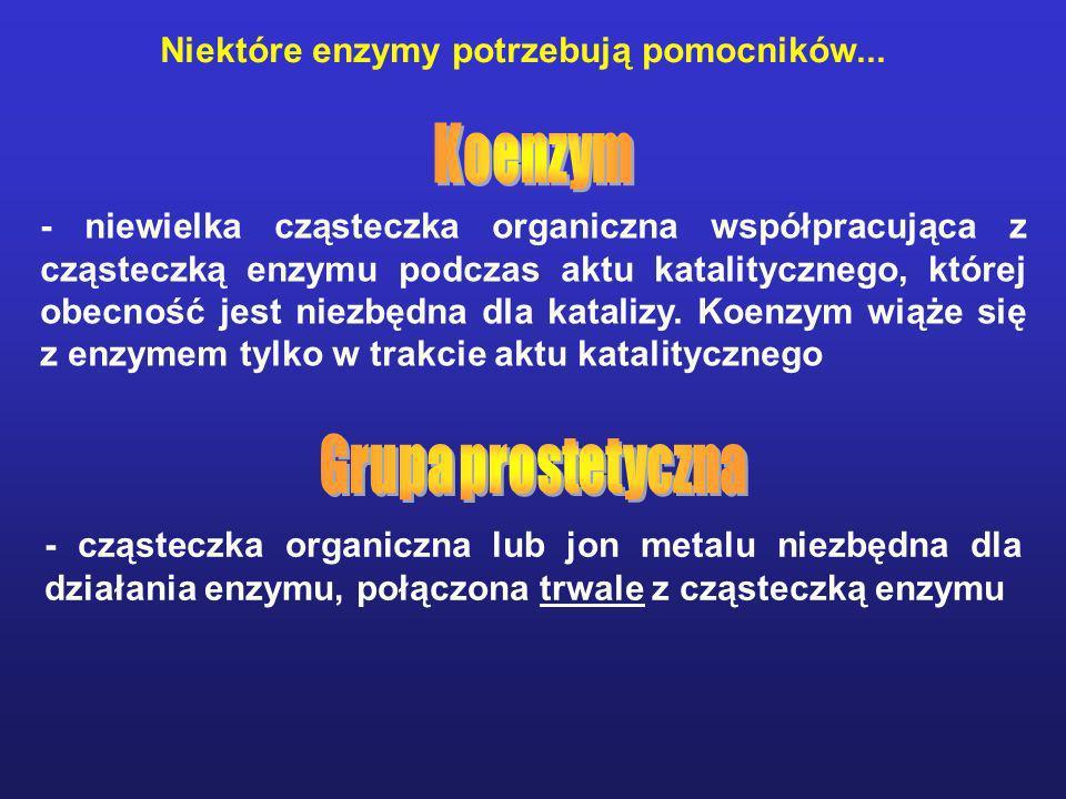 Koenzym Grupa prostetyczna