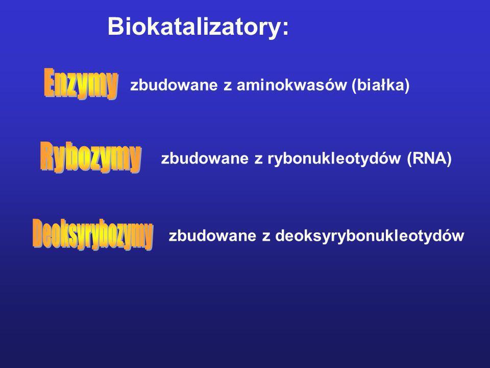 Enzymy Rybozymy Deoksyrybozymy