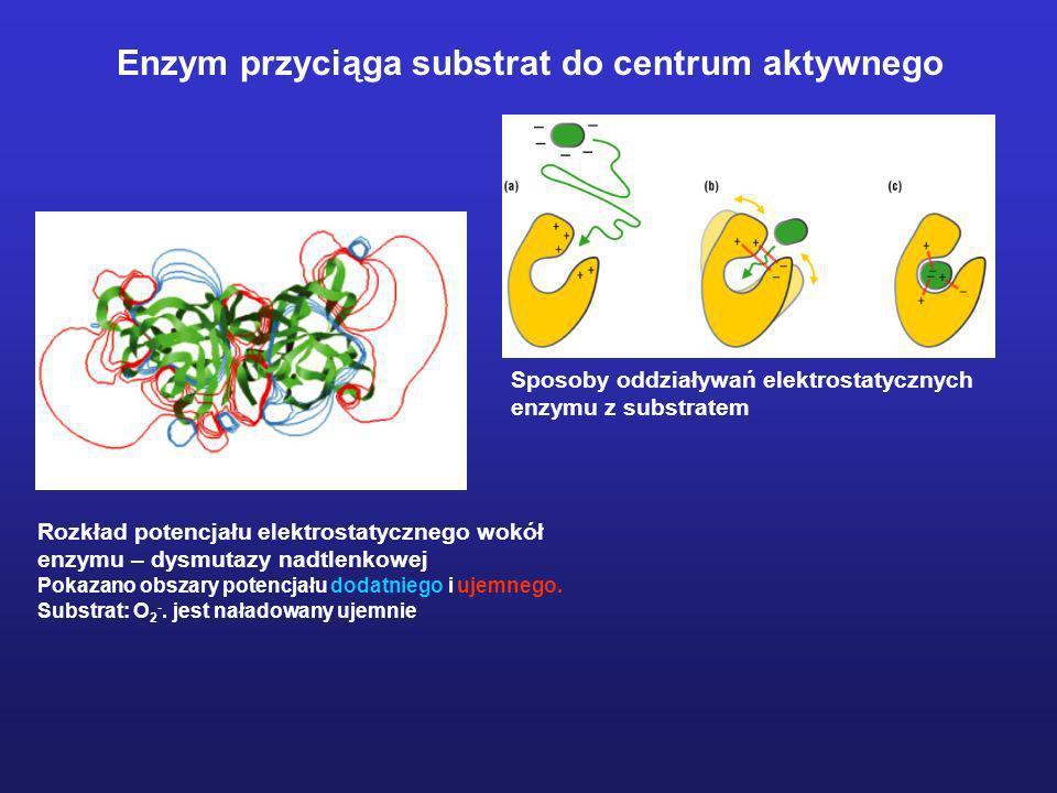 Enzym przyciąga substrat do centrum aktywnego