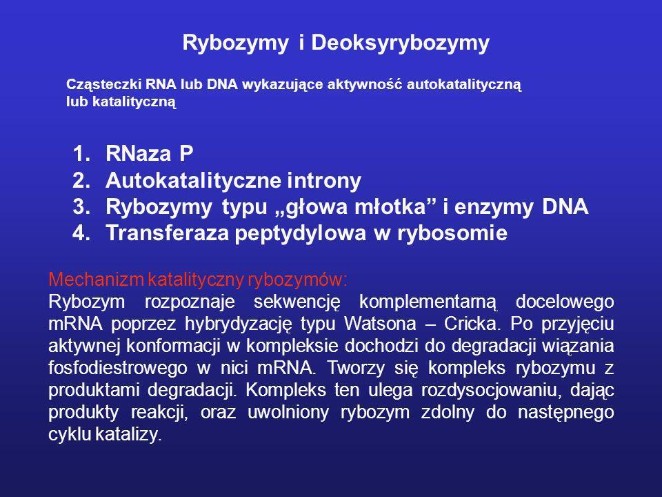 Rybozymy i Deoksyrybozymy