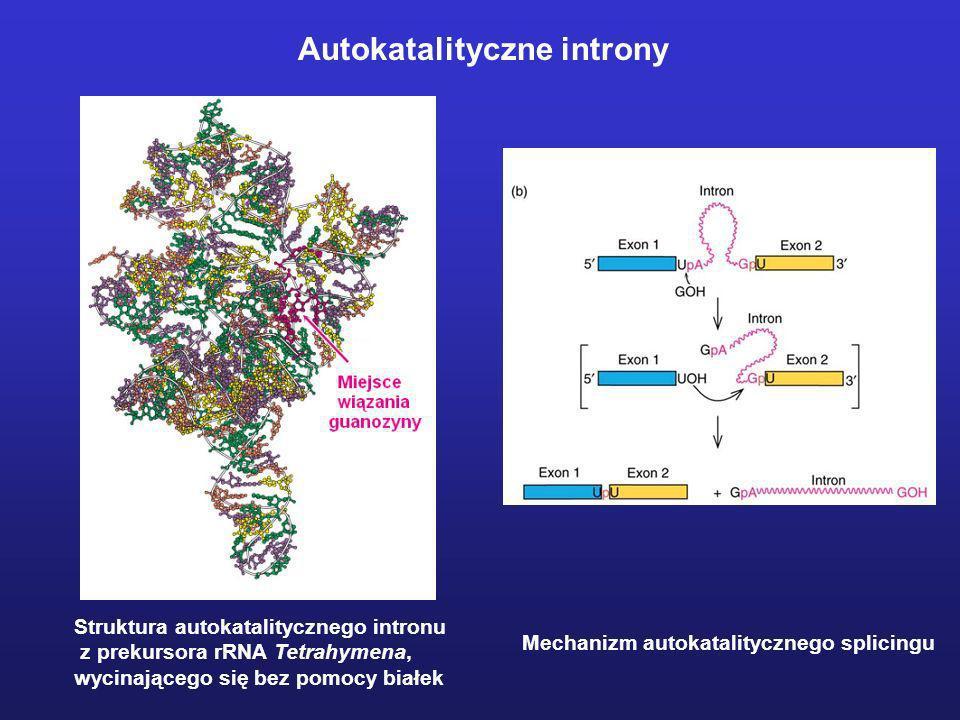Autokatalityczne introny