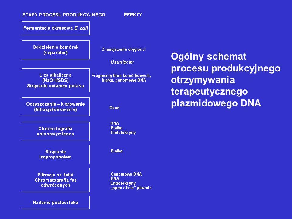 Ogólny schemat procesu produkcyjnego otrzymywania terapeutycznego plazmidowego DNA
