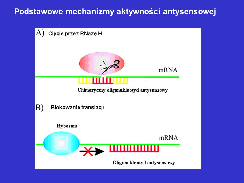 Podstawowe mechanizmy aktywności antysensowej