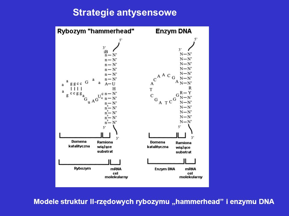 Strategie antysensowe