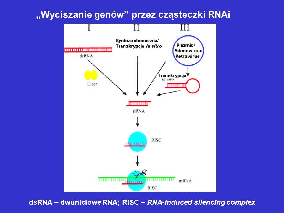 """""""Wyciszanie genów przez cząsteczki RNAi"""