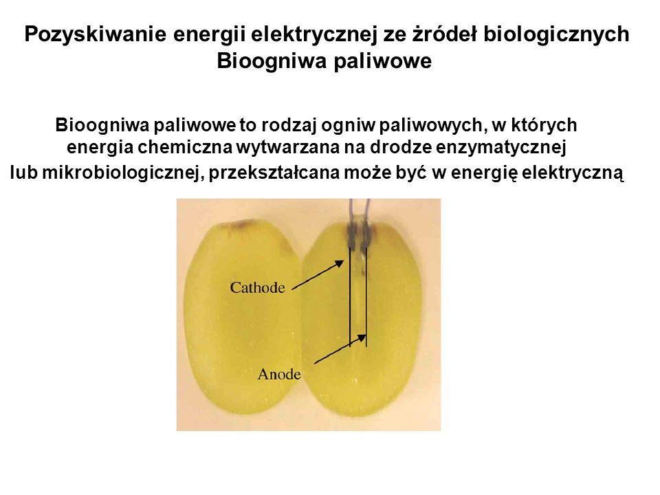 Pozyskiwanie energii elektrycznej ze żródeł biologicznych
