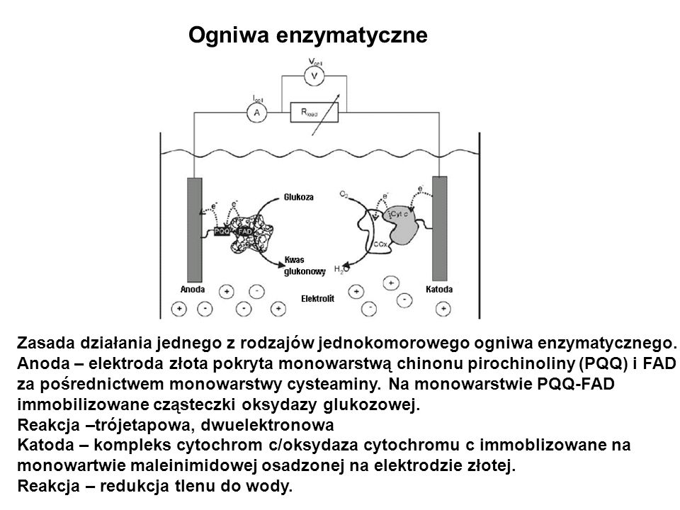 Ogniwa enzymatyczne Zasada działania jednego z rodzajów jednokomorowego ogniwa enzymatycznego.