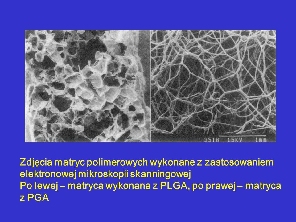 Zdjęcia matryc polimerowych wykonane z zastosowaniem