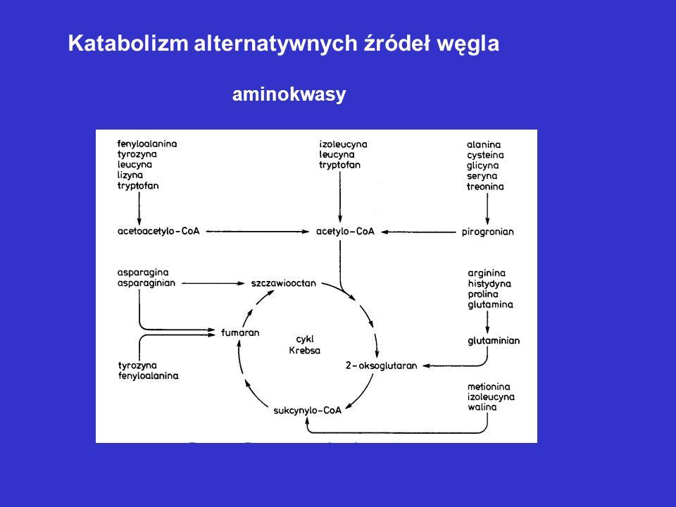 Katabolizm alternatywnych źródeł węgla