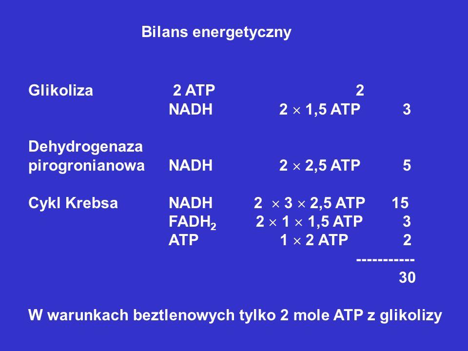 Bilans energetyczny Glikoliza 2 ATP 2. NADH 2  1,5 ATP 3. Dehydrogenaza. pirogronianowa NADH 2  2,5 ATP 5.