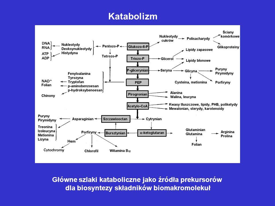 Katabolizm Główne szlaki kataboliczne jako źródła prekursorów
