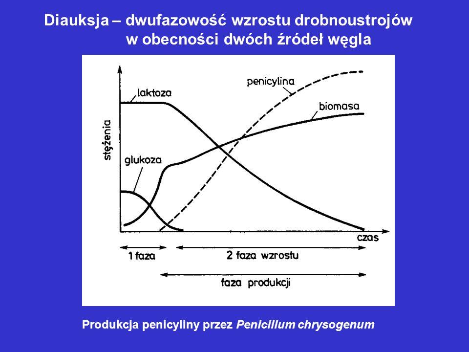 Diauksja – dwufazowość wzrostu drobnoustrojów
