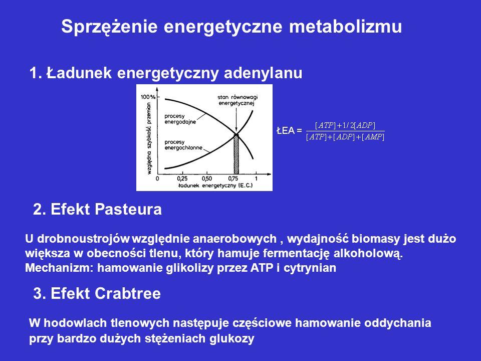 Sprzężenie energetyczne metabolizmu