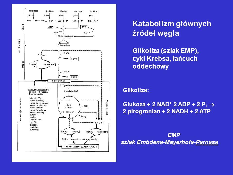 Katabolizm głównych źródeł węgla Glikoliza (szlak EMP),