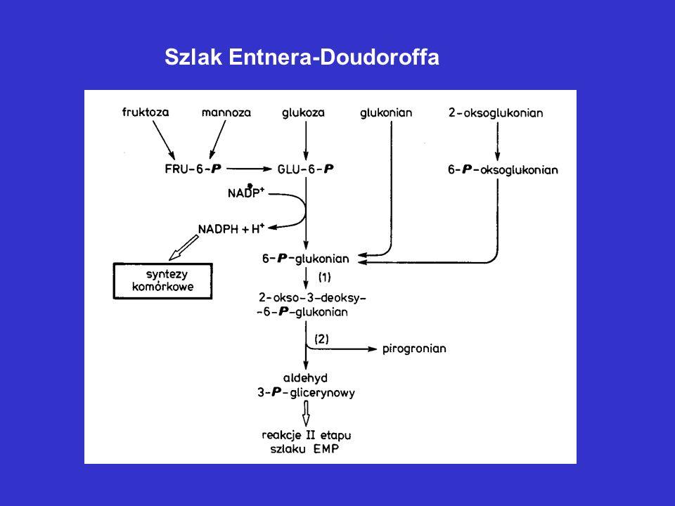 Szlak Entnera-Doudoroffa