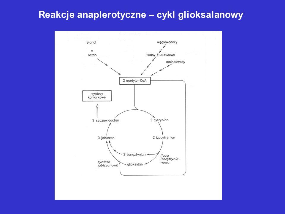 Reakcje anaplerotyczne – cykl glioksalanowy