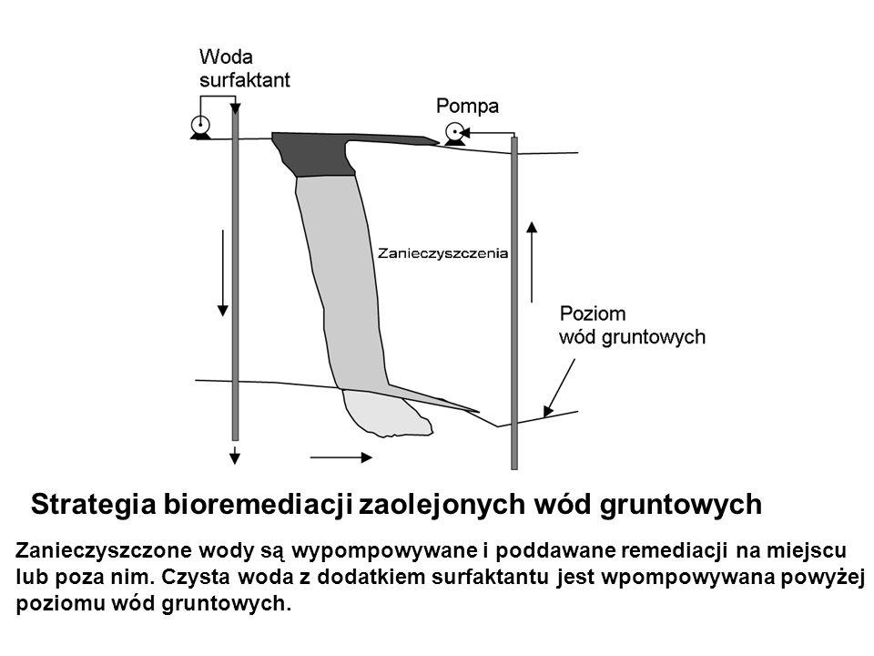 Strategia bioremediacji zaolejonych wód gruntowych