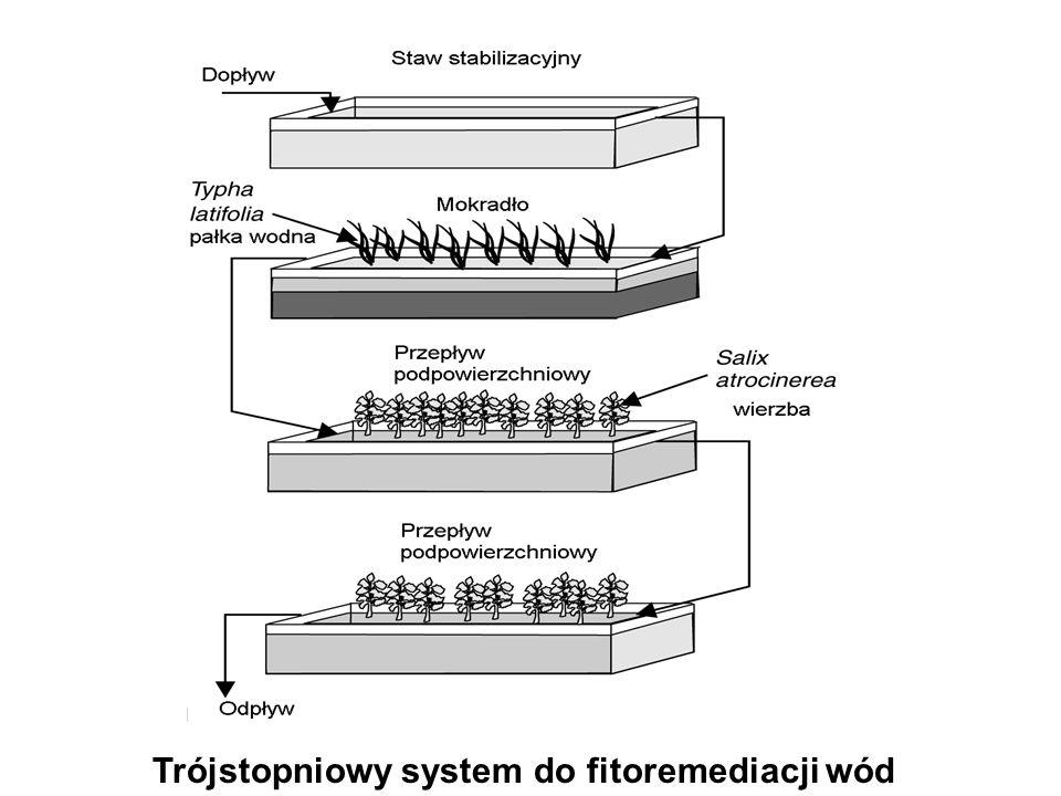 Trójstopniowy system do fitoremediacji wód