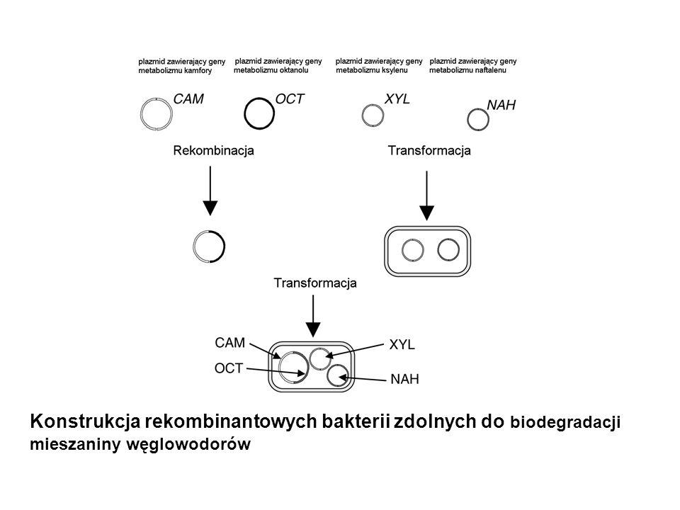 Konstrukcja rekombinantowych bakterii zdolnych do biodegradacji